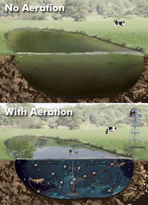 Pond aeration pond stocking lake stocking fish farm for Fish pond aerator